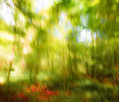 Wald in Grün Rot