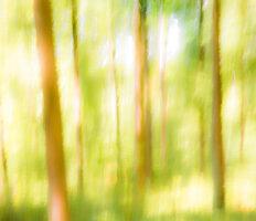 IMG_8267-Waldlichtung im Gegenlicht
