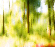 IMG_8270-Waldlichtung Gelb Rot