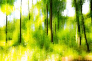 IMG_8270-Waldlichtung-Grün
