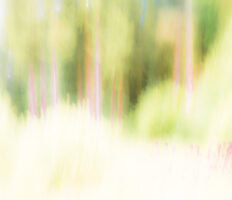 IMG_8271-Verblassung-Waldlichtung