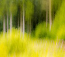 IMG_8271-Waldlichtung 1